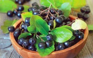 Полезные свойства и противопоказания черноплодной рябины
