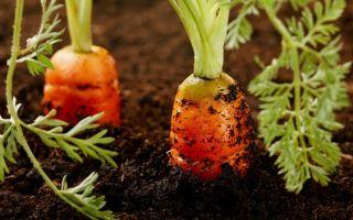 8 народных средств для удобрения сада и огорода