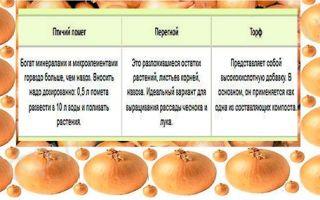 Чем правильно подкормить лук, чтобы был крупный