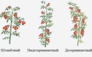 Правильный уход за помидорами после высадки в грунт