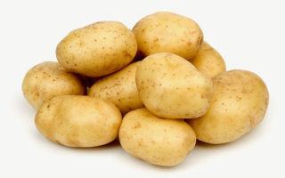 Подробное описание и характеристика картофеля импала