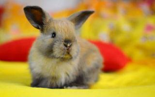 Уход и содержание декоративных кроликов домашних условиях