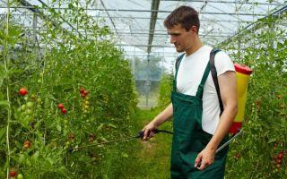 7 лучших фунгицидов для томатов в теплице и открытом грунте