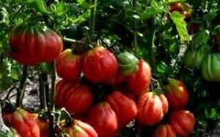 Что это такое штамбовые томаты?