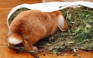 Как и чем кормить декоративного кролика в домашних условиях?