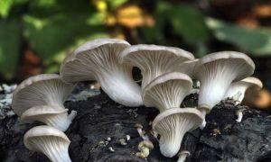 Что такое мицелий грибов и как это выглядит