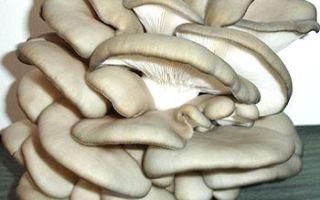 Требования к теплице для разведения грибов