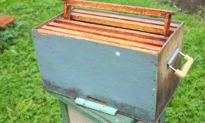 Как сделать ловушку для пчел своими руками