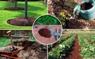 Что такое компост и как его сделать своими руками