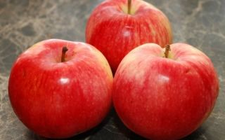 Описание сорта яблони Услада