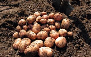 Какие удобрения нужно вносить при посадке картофеля