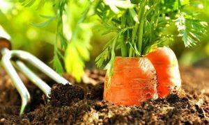 Как сделать ручную сеялку для моркови своими руками