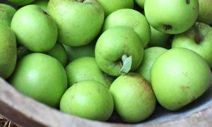 Недозрелые яблоки: что с ними можно сделать?
