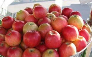 Полное описание сорта яблок Пепин шафранный