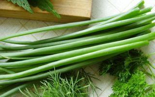 Как посадить лук на зелень весной в открытом грунте и теплице
